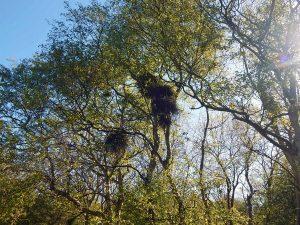 Vogelnester in dem Naturschutzgebiet Oranjezon in Zeeland