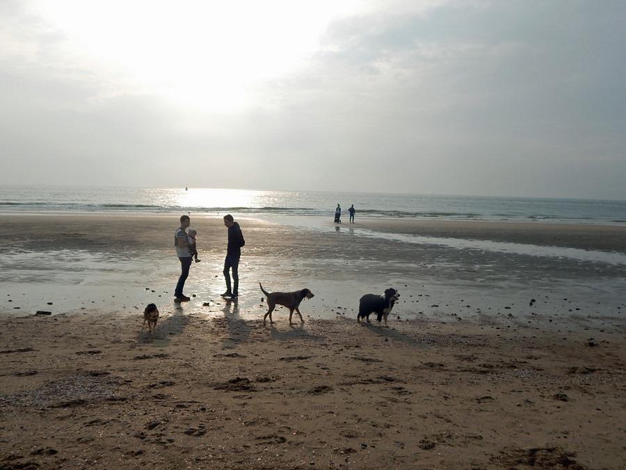 Abendliche Strandstimmung bei Dishoek