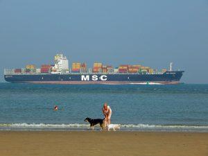 Containerschiff auf Westerschelde