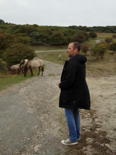 """""""Hier mal ein tolles Bild mit den Wildpferden von Oranjezon"""" schreibt dieser Leser."""